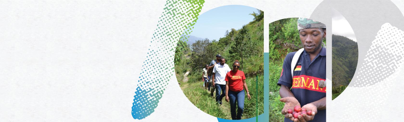 Agricultores preservan las cuencas de Jamaica